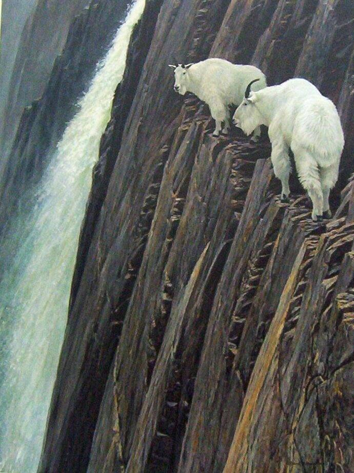 Top 10 world's Mountain climbing goats